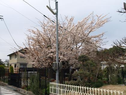 20100403_09_umoregi.jpg