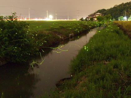 20100602_hotaru03.jpg