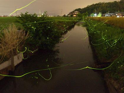 20100602_hotaru04.jpg