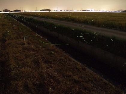20120601_firebug02.jpg