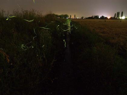 20130603_Firefly_02.jpg