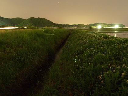 20140524_hotaru_001.jpg