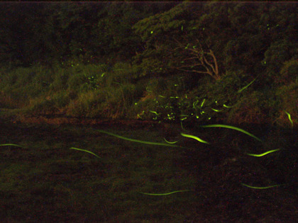 20150614_firefly_02.jpg