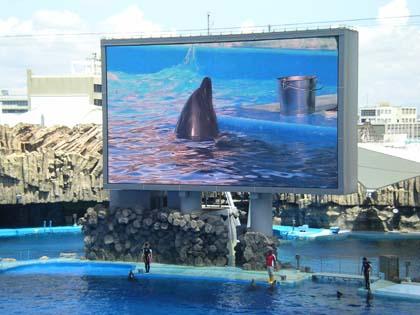 20100803_nagoya_dolphin.jpg
