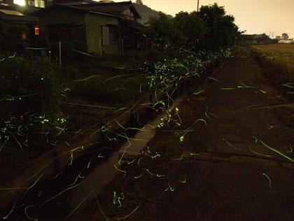20110605_hotaru_020_s.jpg