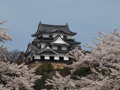 20120415_castle_hikone_064.jpg