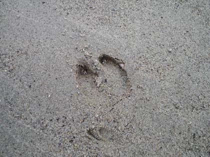 20120929_footprint02.jpg