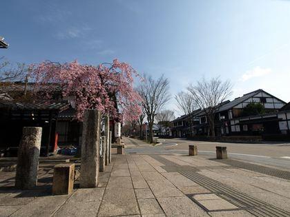 20140402_sakura_014_R.jpg