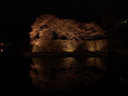 20150402_castle_hikone_016.jpg