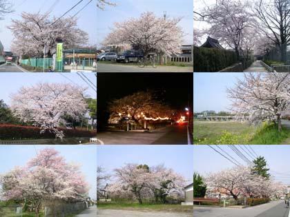 0406_collage.jpg