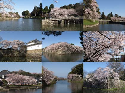 20100408_castle_hikone.jpg