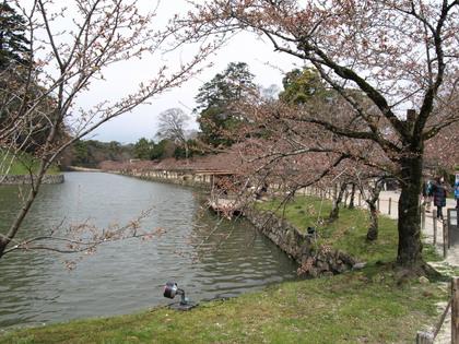 20100403_06_genkyu.jpg