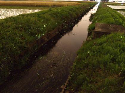 20100531_hotaru01.jpg