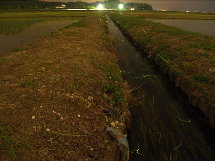 20100601_hotaru01.jpg