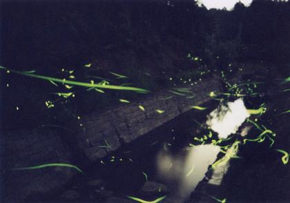 20070612_hotaru_takatori01.jpg
