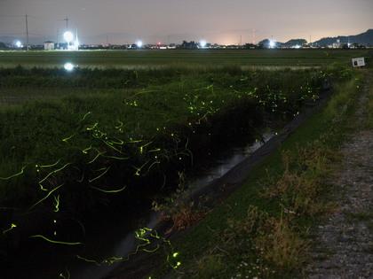 20150526_firefly_02.jpg