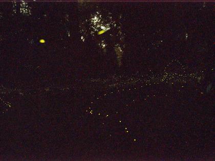 20150614_firefly_03.jpg