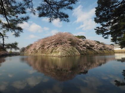 20160402_sakura_d_001.jpg
