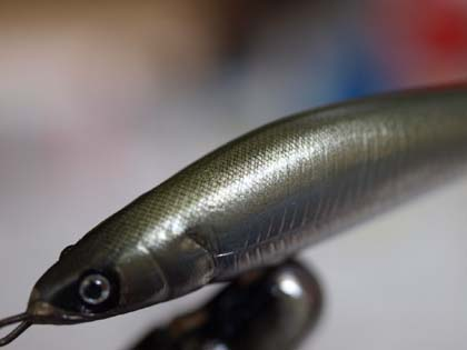 20100203_minnow_scale.jpg