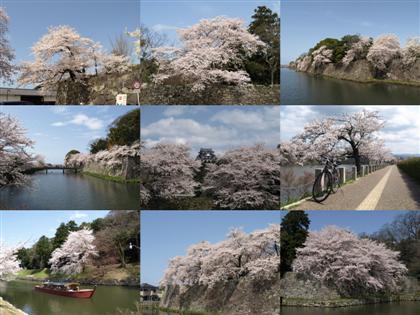 20100410_castle_hikone.jpg