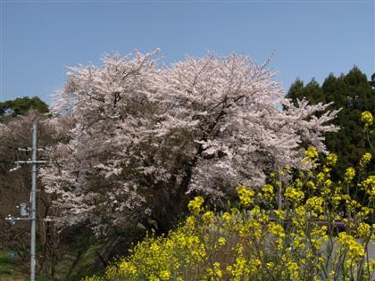 20100410_inukami_16.jpg