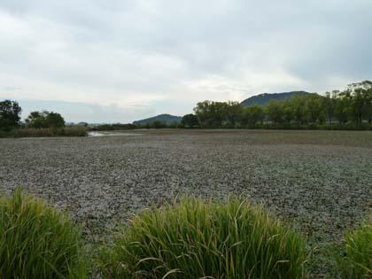 20121006_nodanuma.jpg