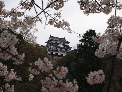 20130409_sakura.jpg